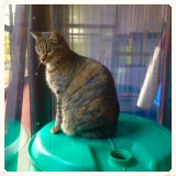 Toys and activities at Copperfield Cattery, Inverness