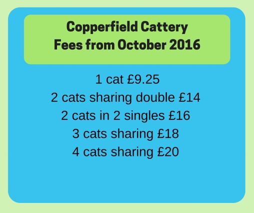 copperfield cattery prices