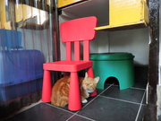 toys at copperfield cattery inverness