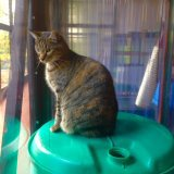 watching the birds at copperfield cattery