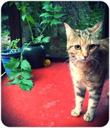 catnip at copperfield cattery inverness