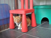 hiding places at copperfield cattery inverness