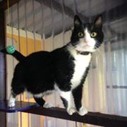 nosy cat at copperfield cattery