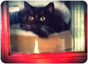 cosy bed at copperfield cattery