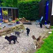 our own 6 cats copperfield cattery